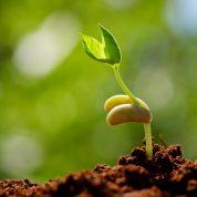 هایپر تره بار | آزمون سلامت بذر