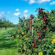 هایپر تره بار | آماده سازی باغ میوه