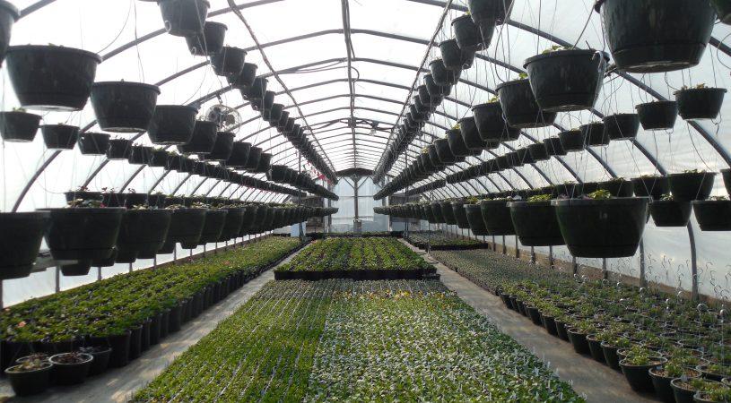 هایپر تره بار   گلخانه