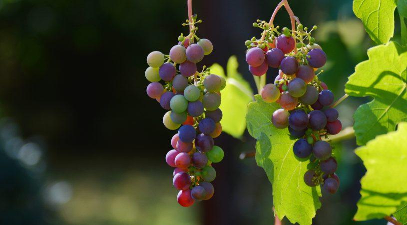 هایپر تره بار | سال آوری در درختان میوه