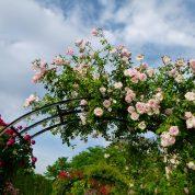هایپر تره بار | آبیاری گیاهان زینتی