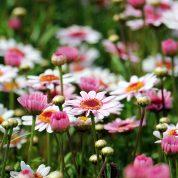 هایپر تره بار | آفات گیاهان زینتی