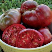 هایپر تره بار | گوجه فرنگی سیاه