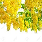 هایپر تره بار | درخت فلوس
