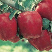هایپر تره بار | سیب