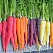 هایپر تره بار | انواع هویج