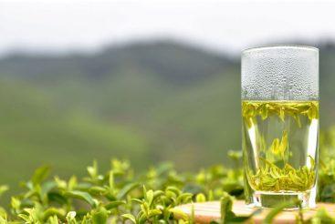 هایپر تره بار | خواص چای سبز