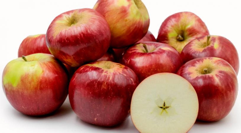 هایپر تره بار | نهال سیب جاناتان