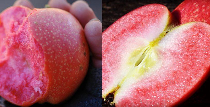 هایپر تره بار | نهال سیب تو سرخ