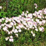 هایپر تره بار | گل اُنوترا